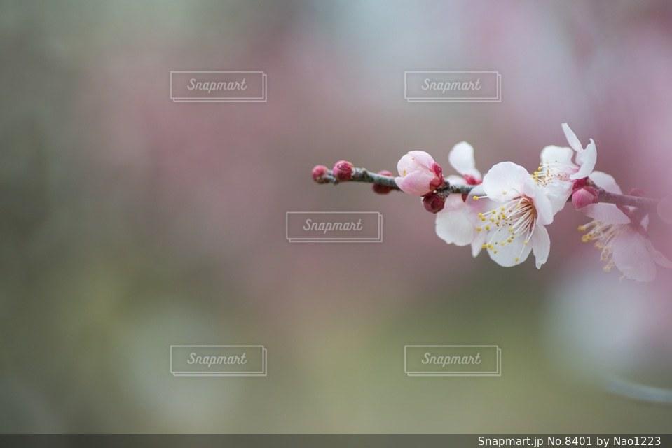 風景の写真・画像素材[8401]