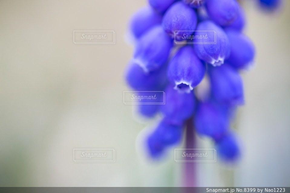風景の写真・画像素材[8399]