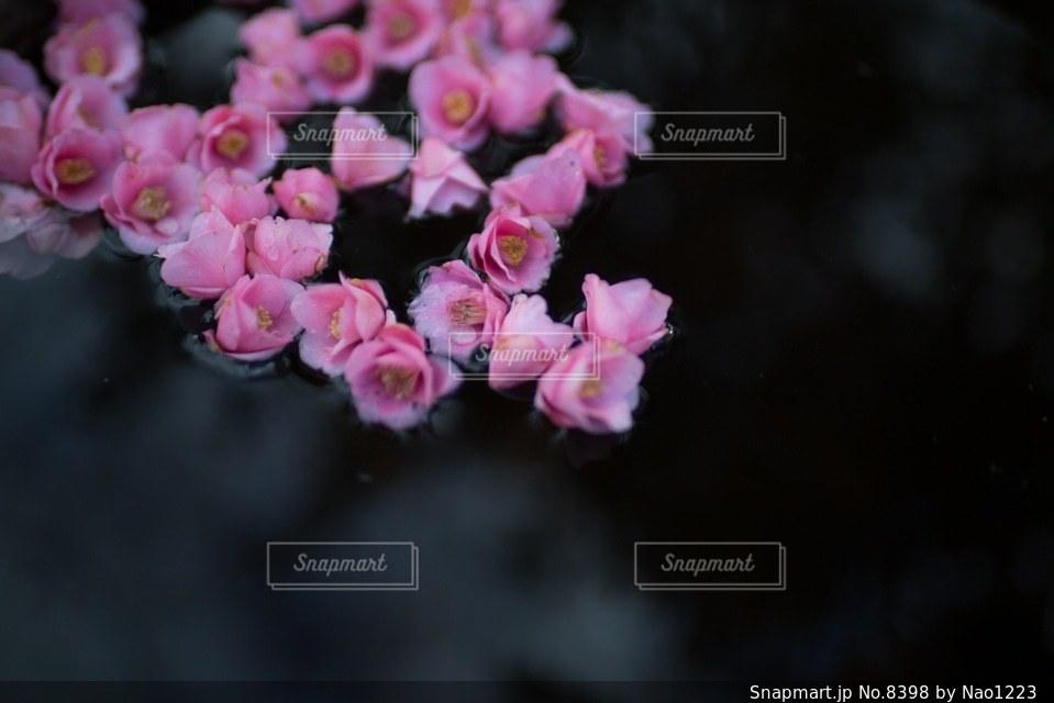 風景の写真・画像素材[8398]