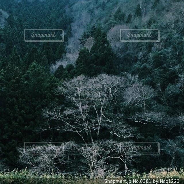 自然の写真・画像素材[8381]