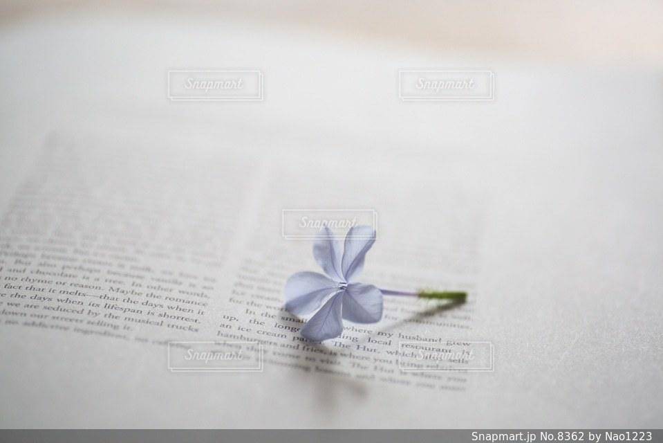 花の写真・画像素材[8362]