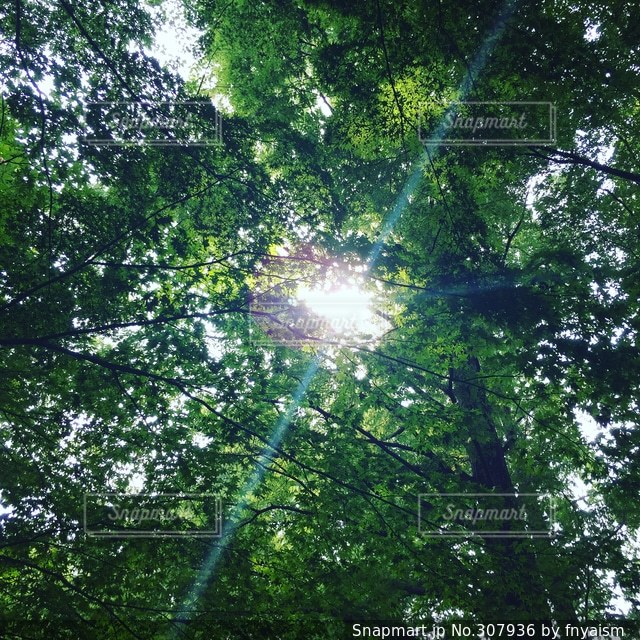 自然の写真・画像素材[307936]