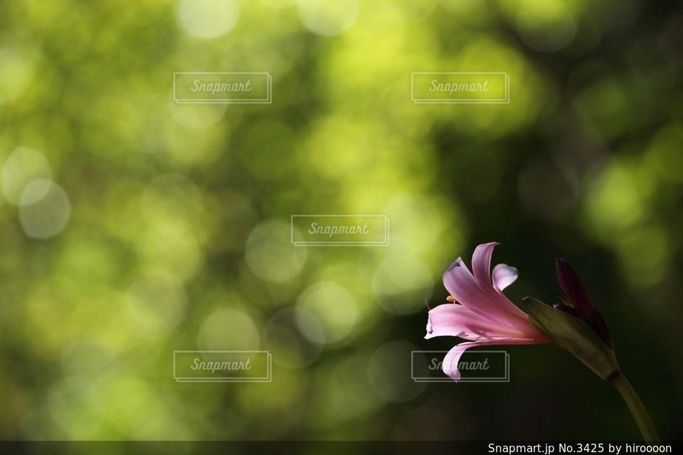 自然の写真・画像素材[3425]