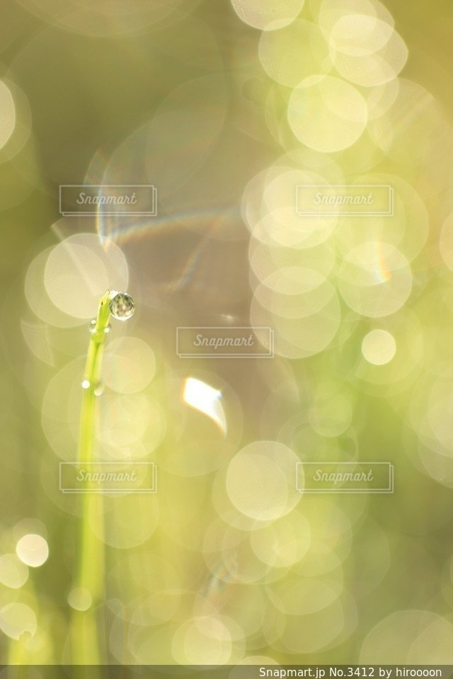 自然の写真・画像素材[3412]