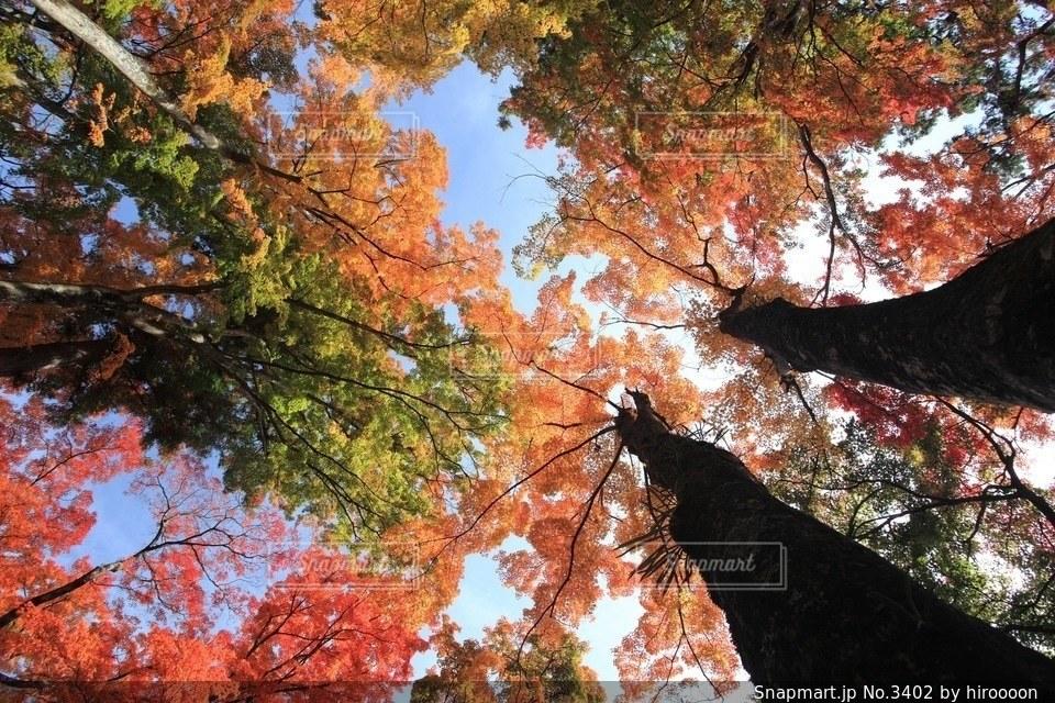 自然の写真・画像素材[3402]