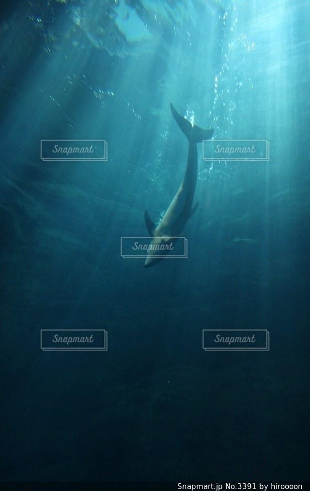 海の写真・画像素材[3391]