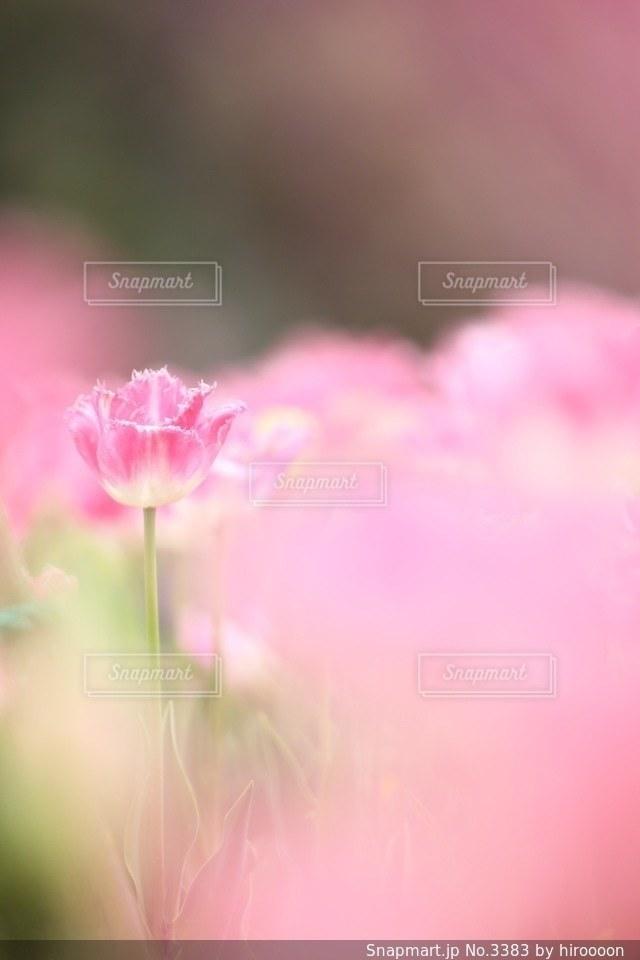 花の写真・画像素材[3383]