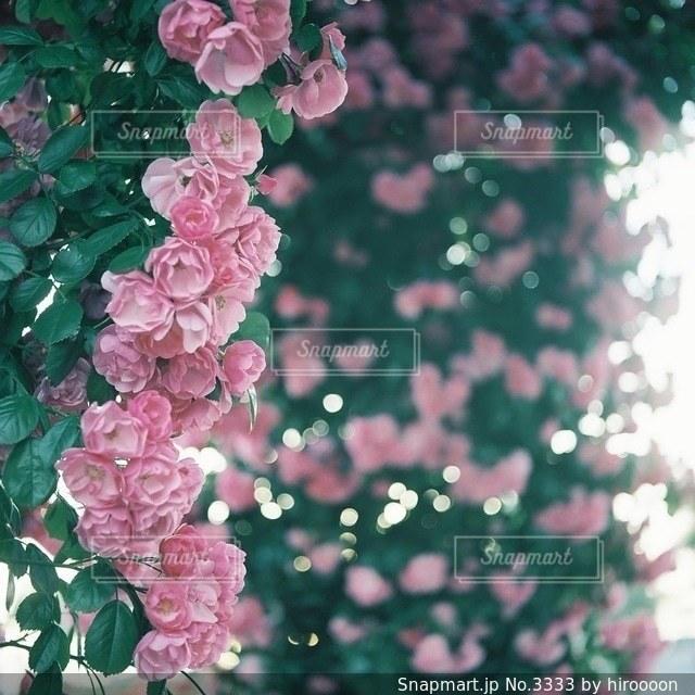 花の写真・画像素材[3333]