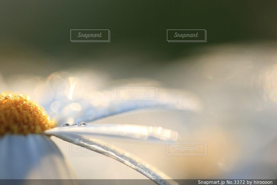 花の写真・画像素材[3372]