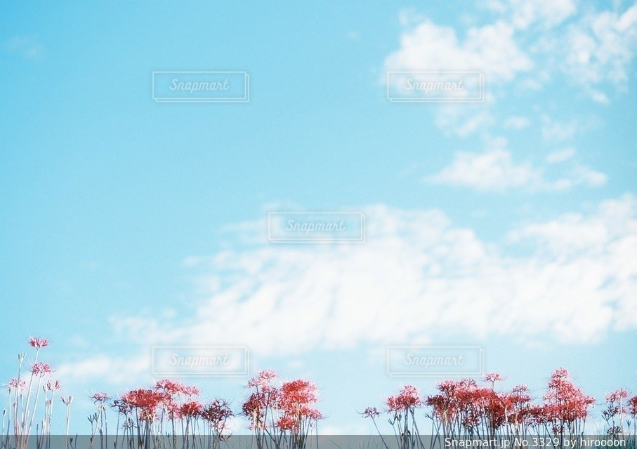 自然の写真・画像素材[3329]