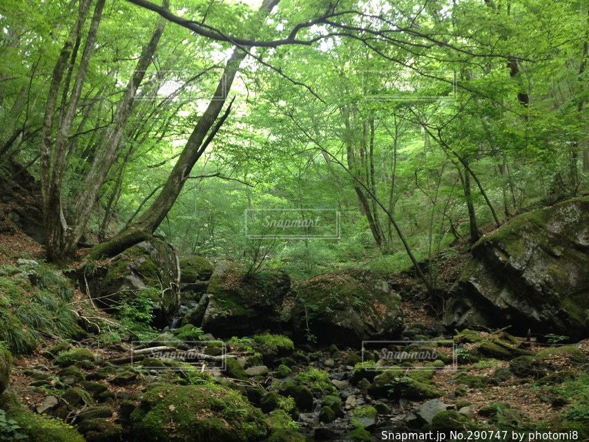 自然の写真・画像素材[290747]