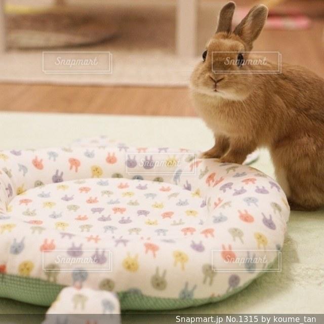 ベッドの上に座っている猫 - No.1315