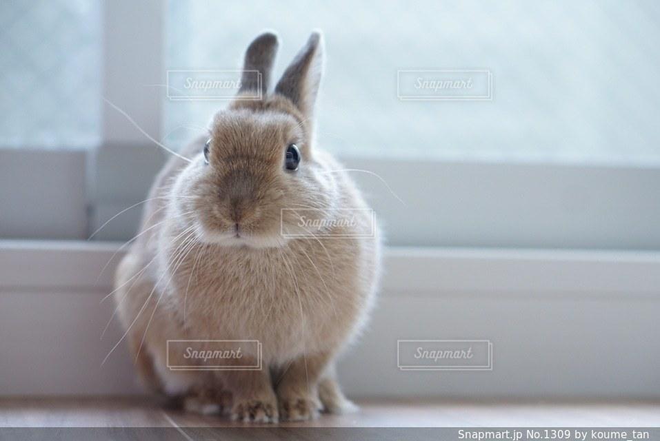 窓の前に座っている猫の写真・画像素材[1309]