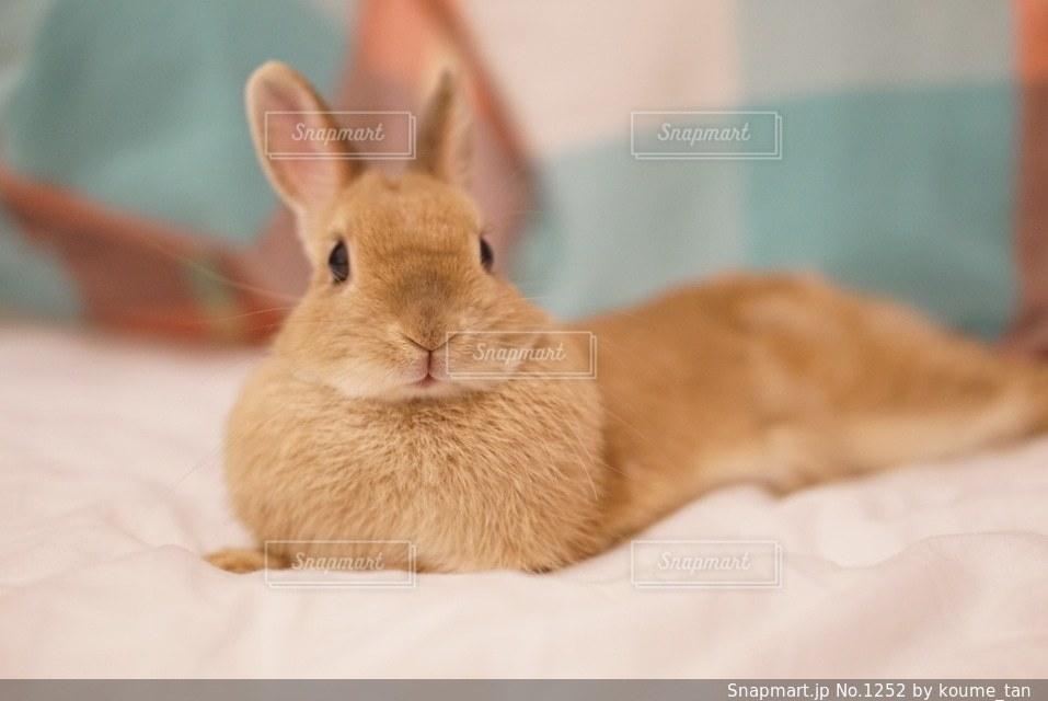 ベッドの上に座ってオレンジと白猫 - No.1252