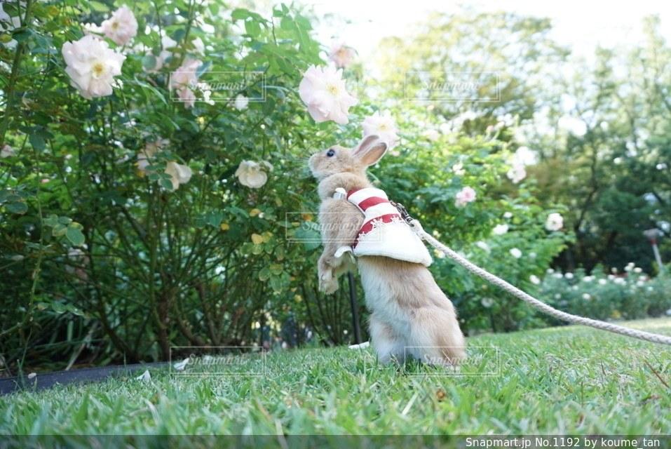 草の中に立っている犬 - No.1192