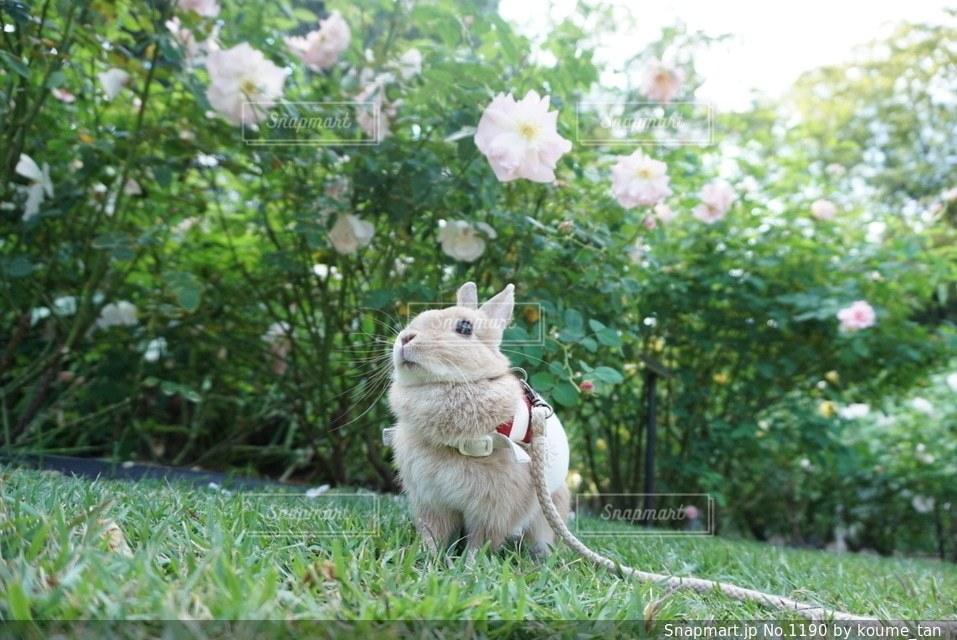 草の上に座って猫対象フィールド - No.1190