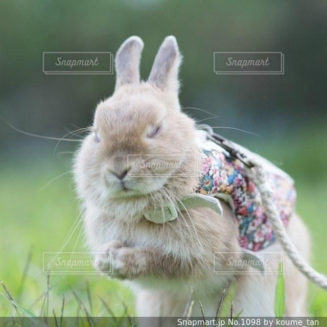 草の中に立っている猫の写真・画像素材[1098]