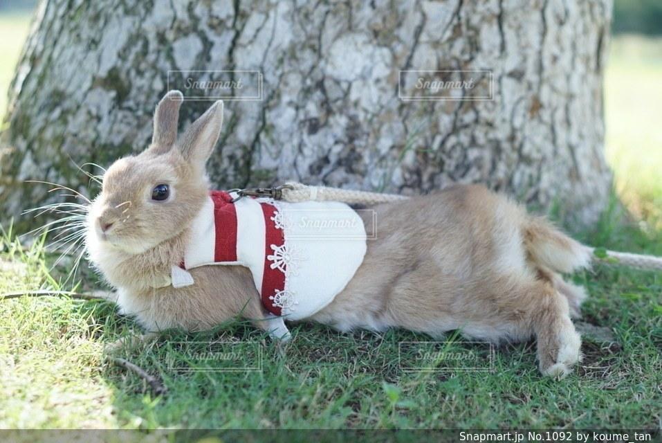 草の中に座っている茶色と白犬の写真・画像素材[1092]