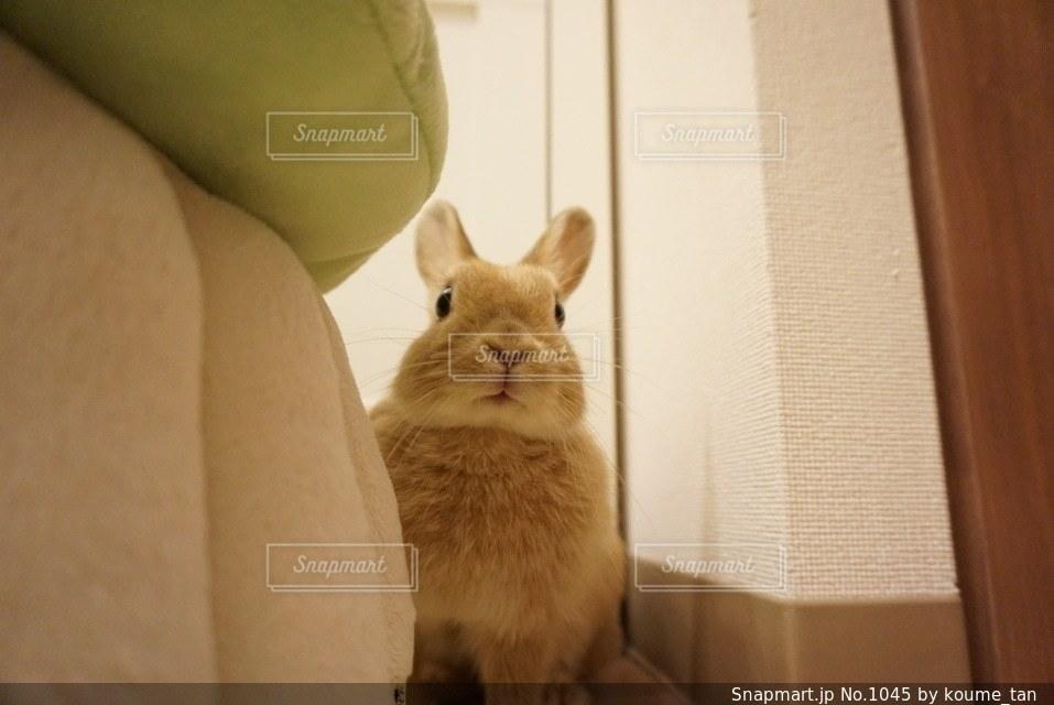カメラを見ている猫の写真・画像素材[1045]