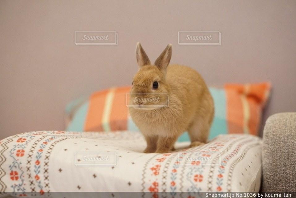 ベッドの上に座ってオレンジと白猫 - No.1036