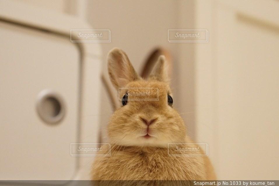 カメラにポーズを鏡の前で座っている猫の写真・画像素材[1033]