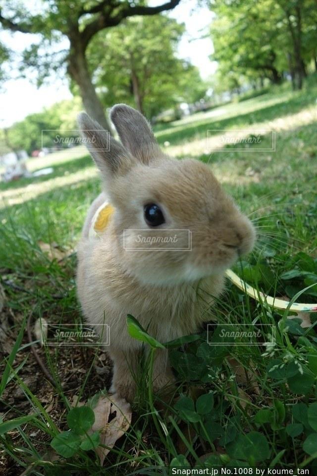 草の中の小動物の写真・画像素材[1008]