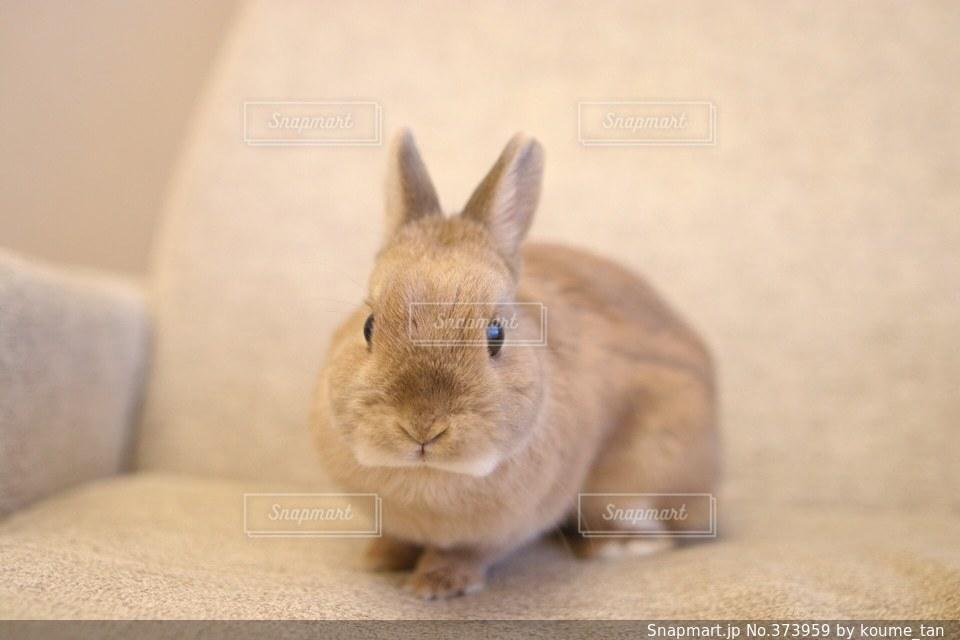 動物の写真・画像素材[373959]