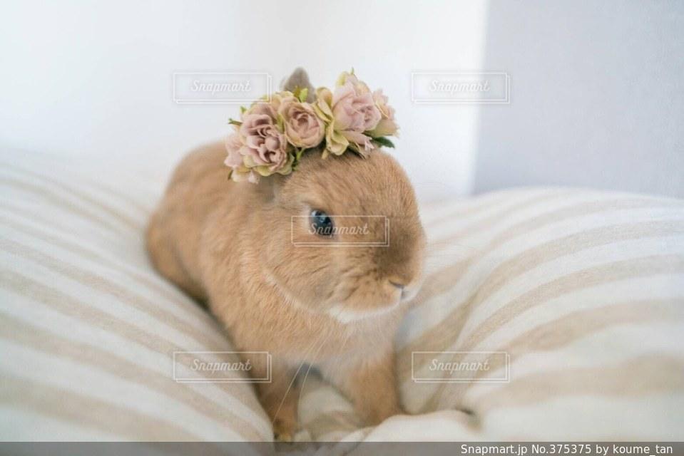 動物の写真・画像素材[375375]