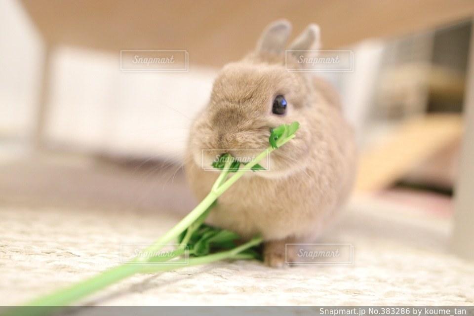 動物の写真・画像素材[383286]