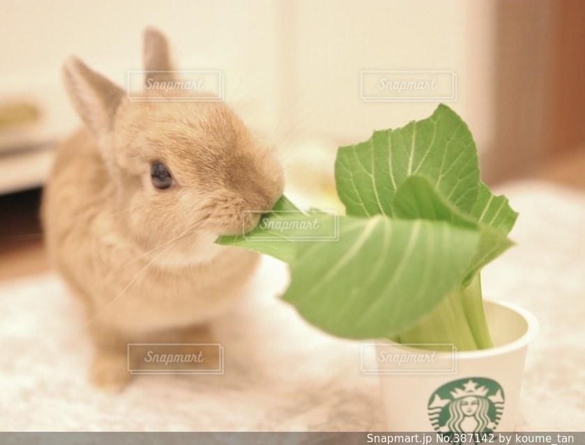 動物の写真・画像素材[387142]