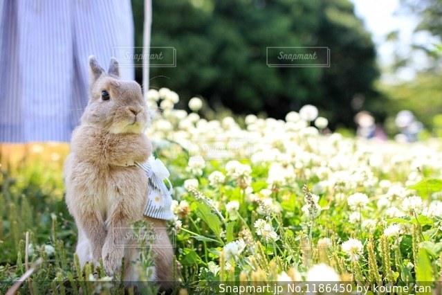 庭の小動物の写真・画像素材[1186450]