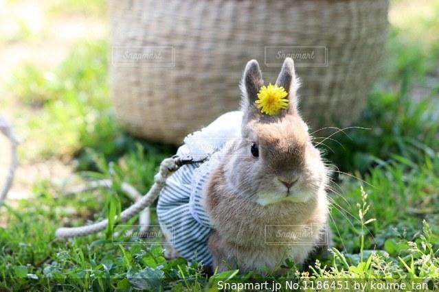 草の中の小さな齧歯動物の写真・画像素材[1186451]