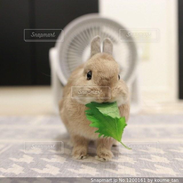 動物の写真・画像素材[1200161]