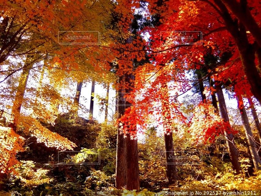 秋の写真・画像素材[292527]