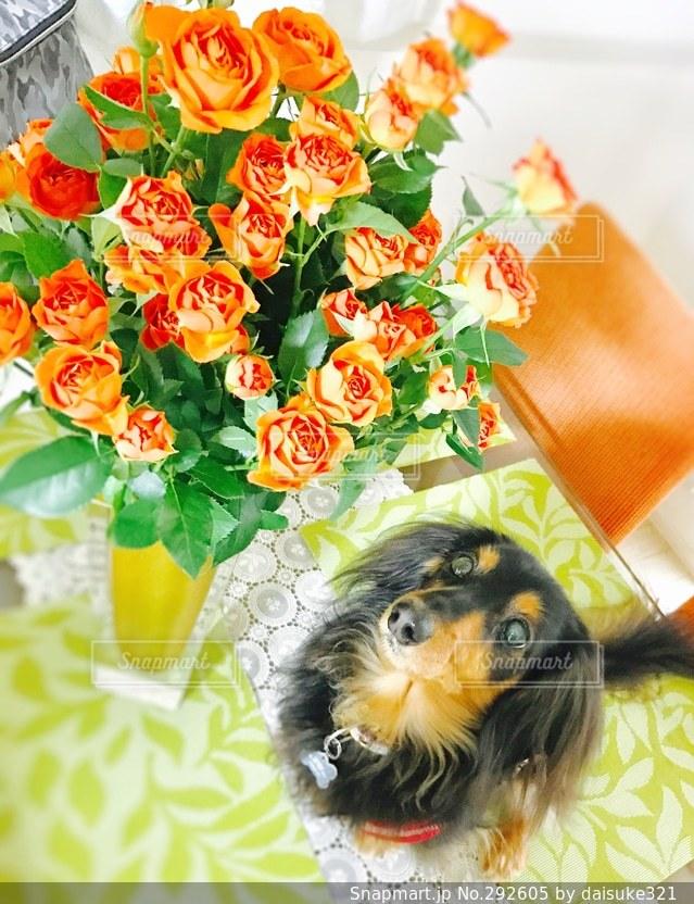 犬の写真・画像素材[292605]