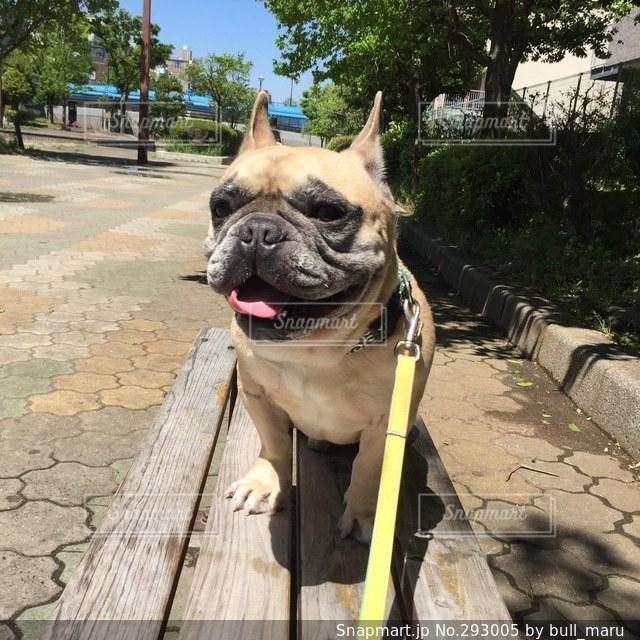 犬 - No.293005