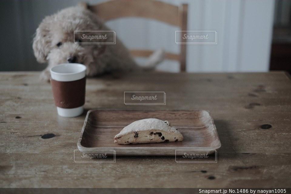 犬の写真・画像素材[1486]