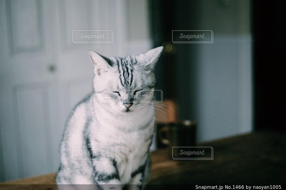 猫 - No.1466