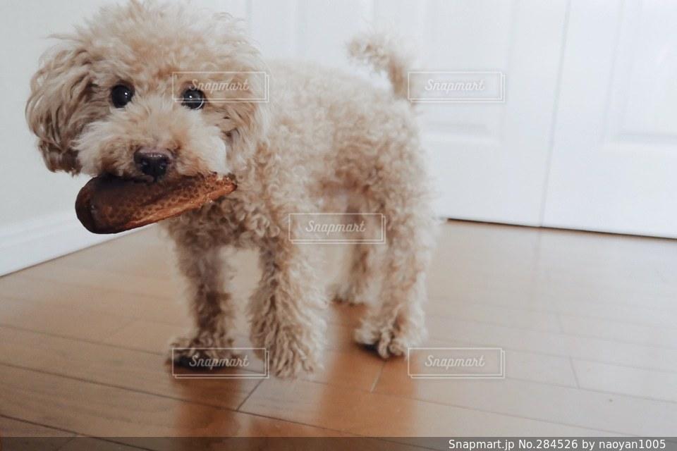 犬の写真・画像素材[284526]