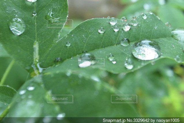 緑の葉のクローズアップの写真・画像素材[3329642]