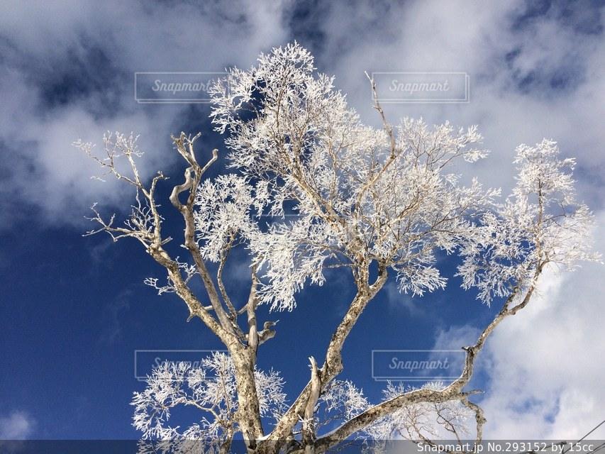 自然の写真・画像素材[293152]