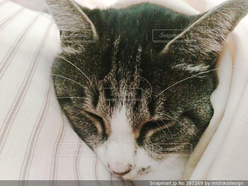 猫,動物,白,ねこ,ペット,寝る,グレー,トラ猫,ネコ,鯖トラ
