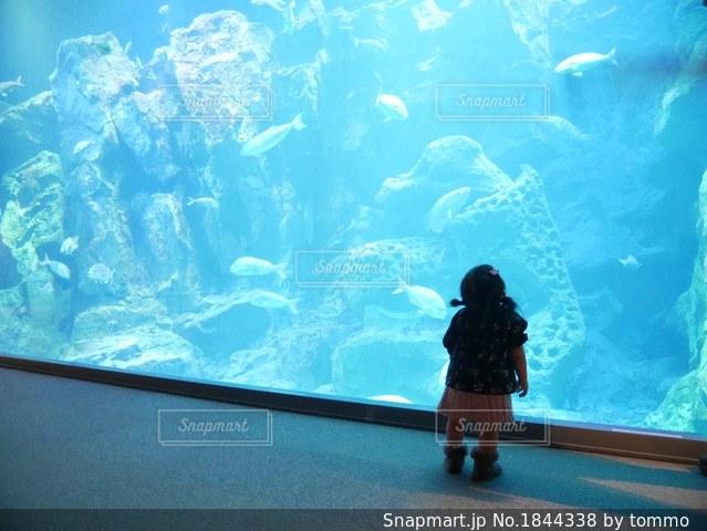 水族館の写真・画像素材[1844338]
