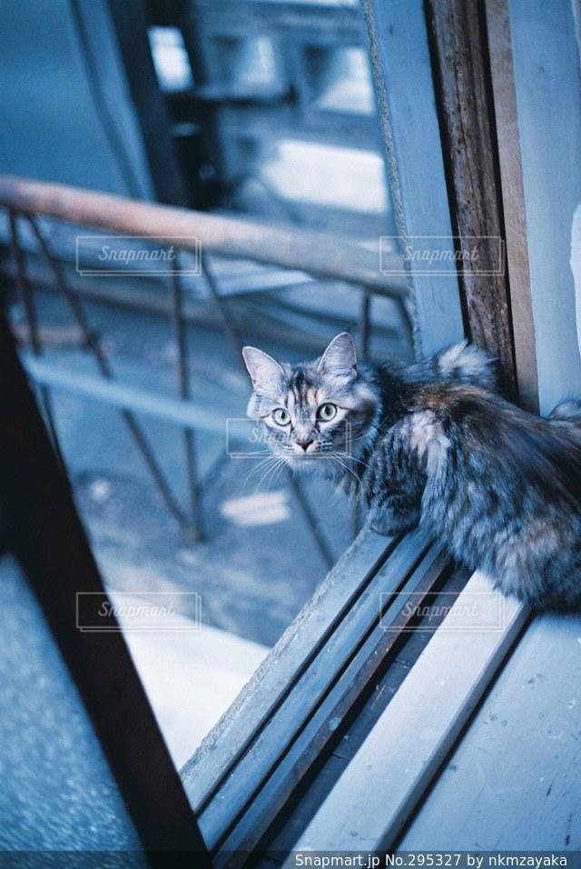 猫 - No.295327