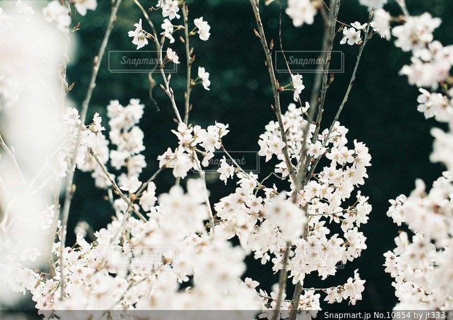 自然の写真・画像素材[10854]