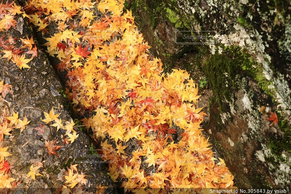 自然の写真・画像素材[305843]