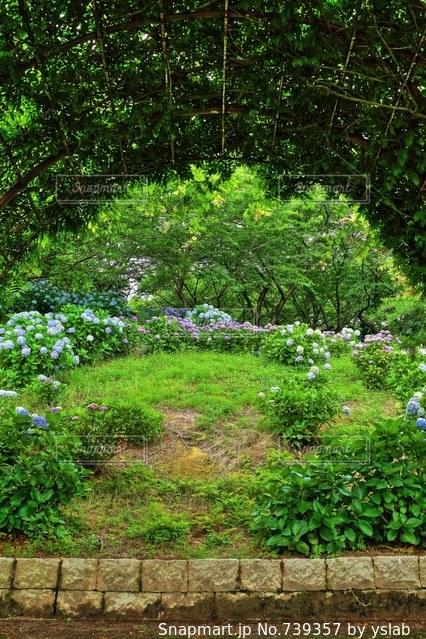 紫陽花とアーチの写真・画像素材[739357]