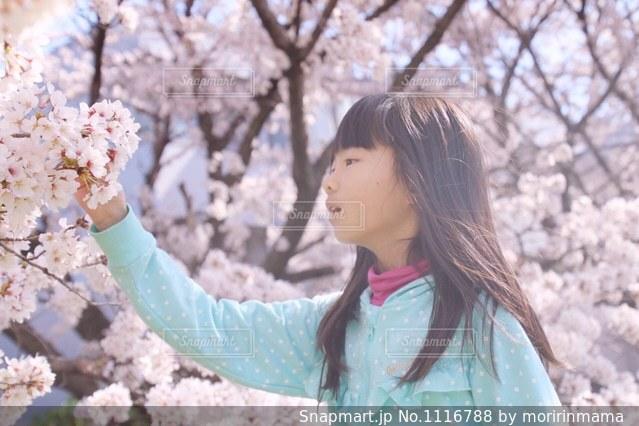 桜と女の子の写真・画像素材[1116788]