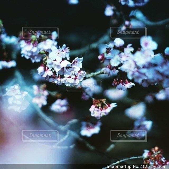 自然の写真・画像素材[2125]
