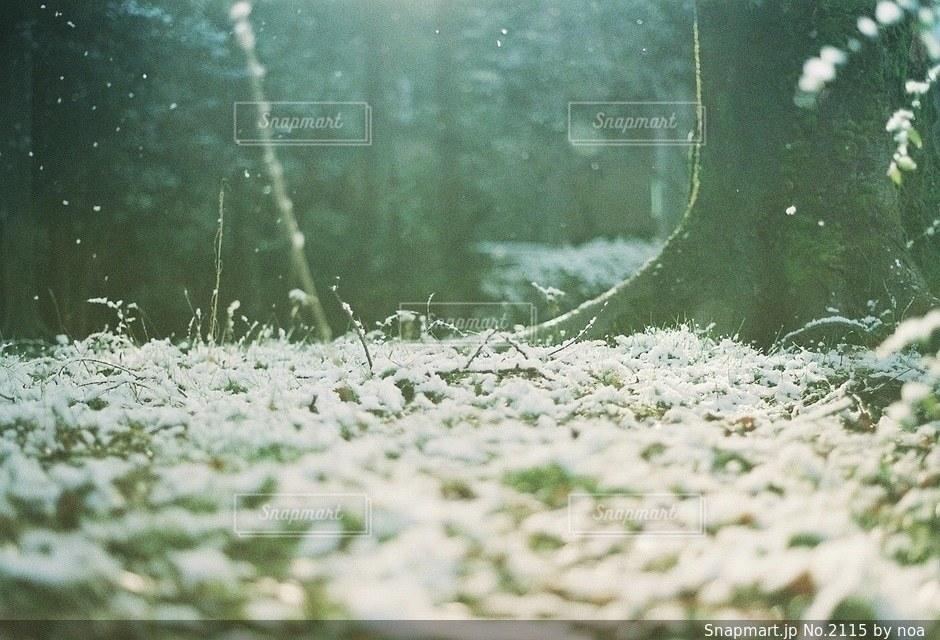 自然の写真・画像素材[2115]